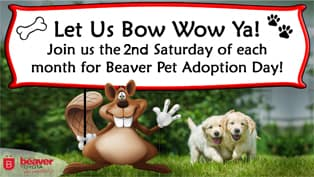 Pet Adoption Day at Beaver Toyota in Forsyth County