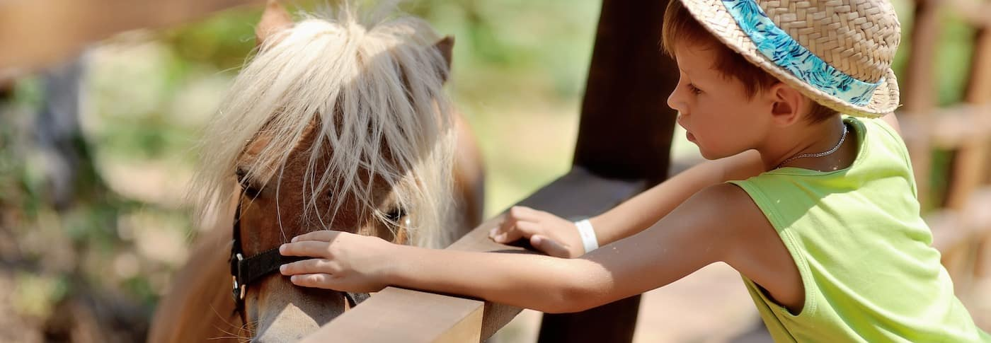 Child touching a horse at a petting zoo