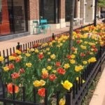 Ten Things To Do In Naperville This Summer