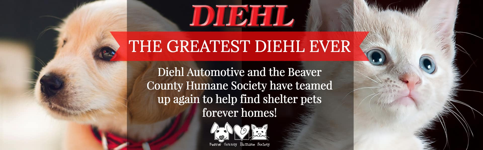 greatest diehl ever diehl automotive beaver county humane society bchs adoption pets pet adoption cats dogs rabbits puppies kitties donate rescue