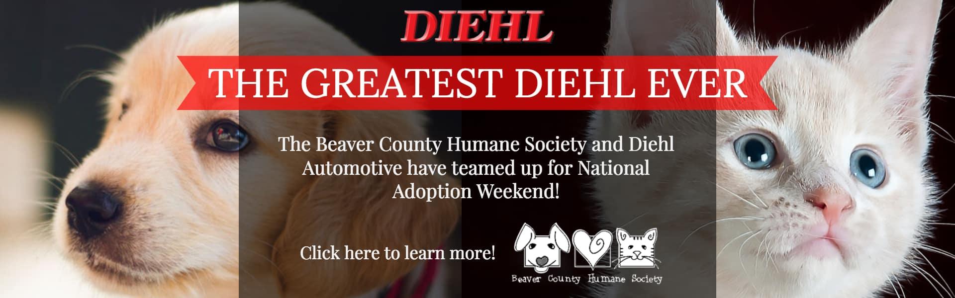 Diehl Volkswagen Greatest Diehl Ever beaver county humane society national adoption weekend petsmart
