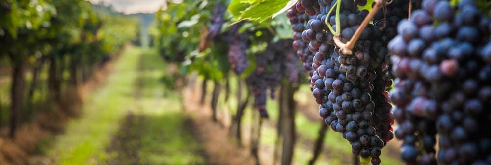 Lakewood Vineyards Penn Yan NY
