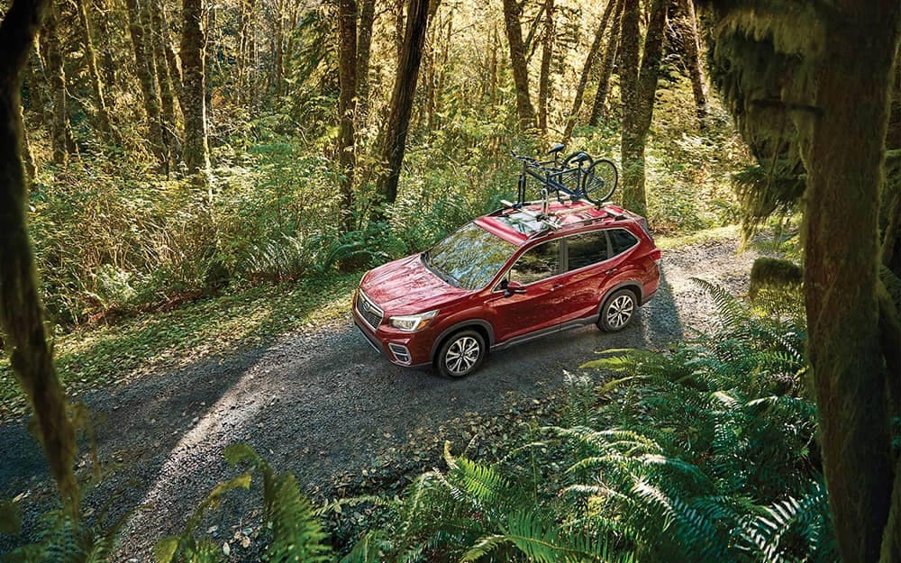 2020 Subaru Forester In The Forest