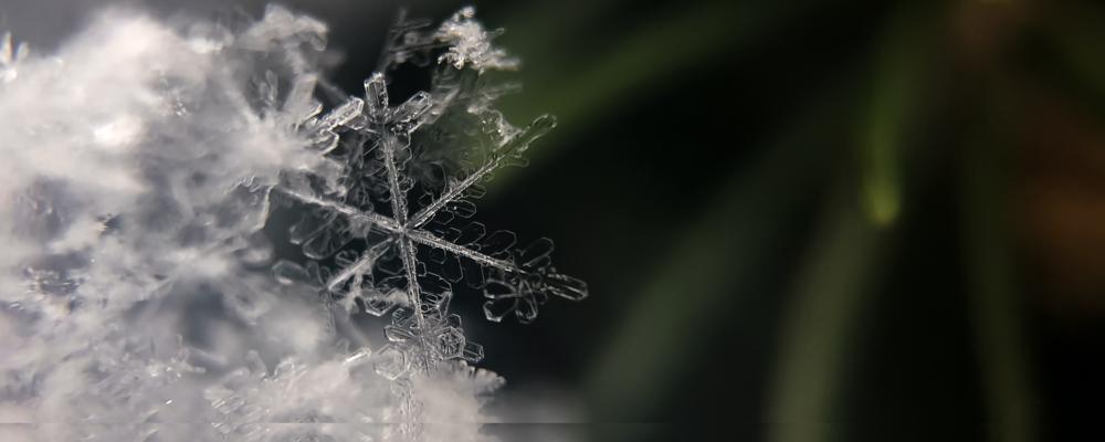 snowflake on a tree