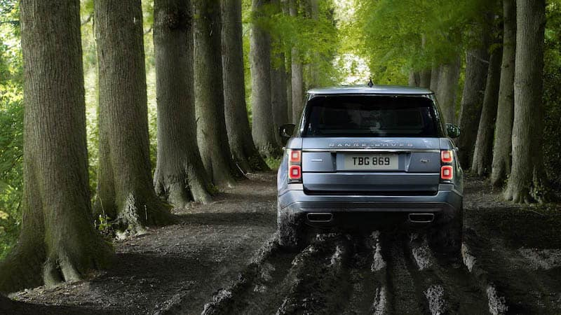 Back view of a light blue Range Rover in a forest between tall trees