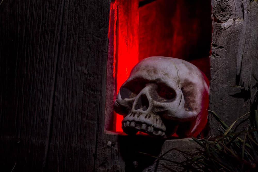 Scary Halloween skull bones sitting in hole in old abandoned wood building lit with red light
