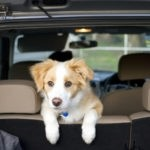 pet mess in your car