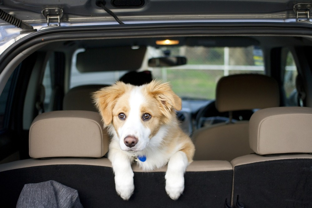 Prevent Pet Mess In Your Car Or Truck